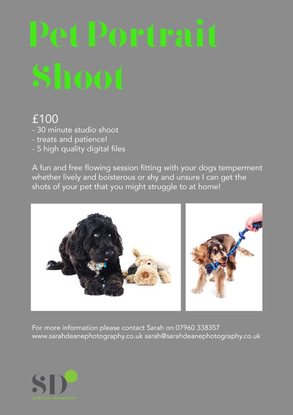 Pet Portrait Flyer